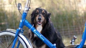 Велопрогулка с собакой